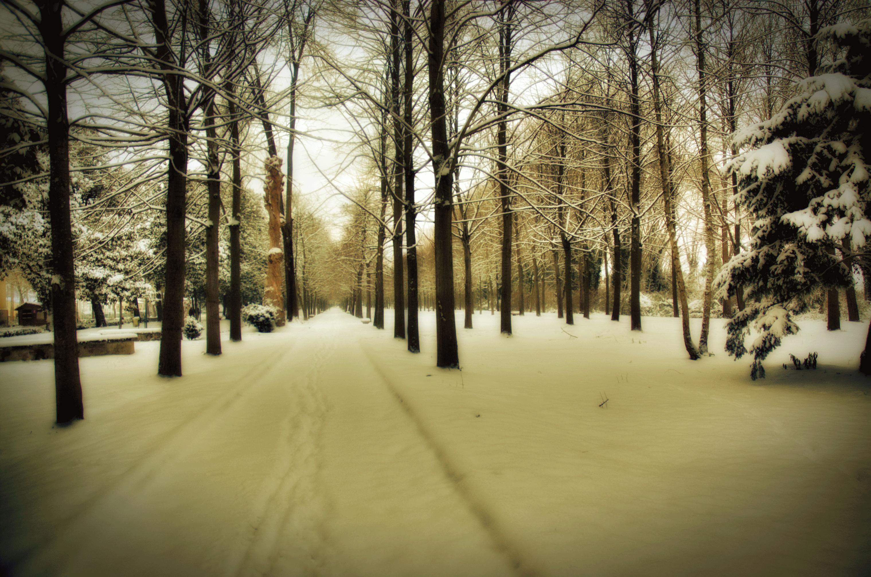 La grande nevicata del Gennaio 1963